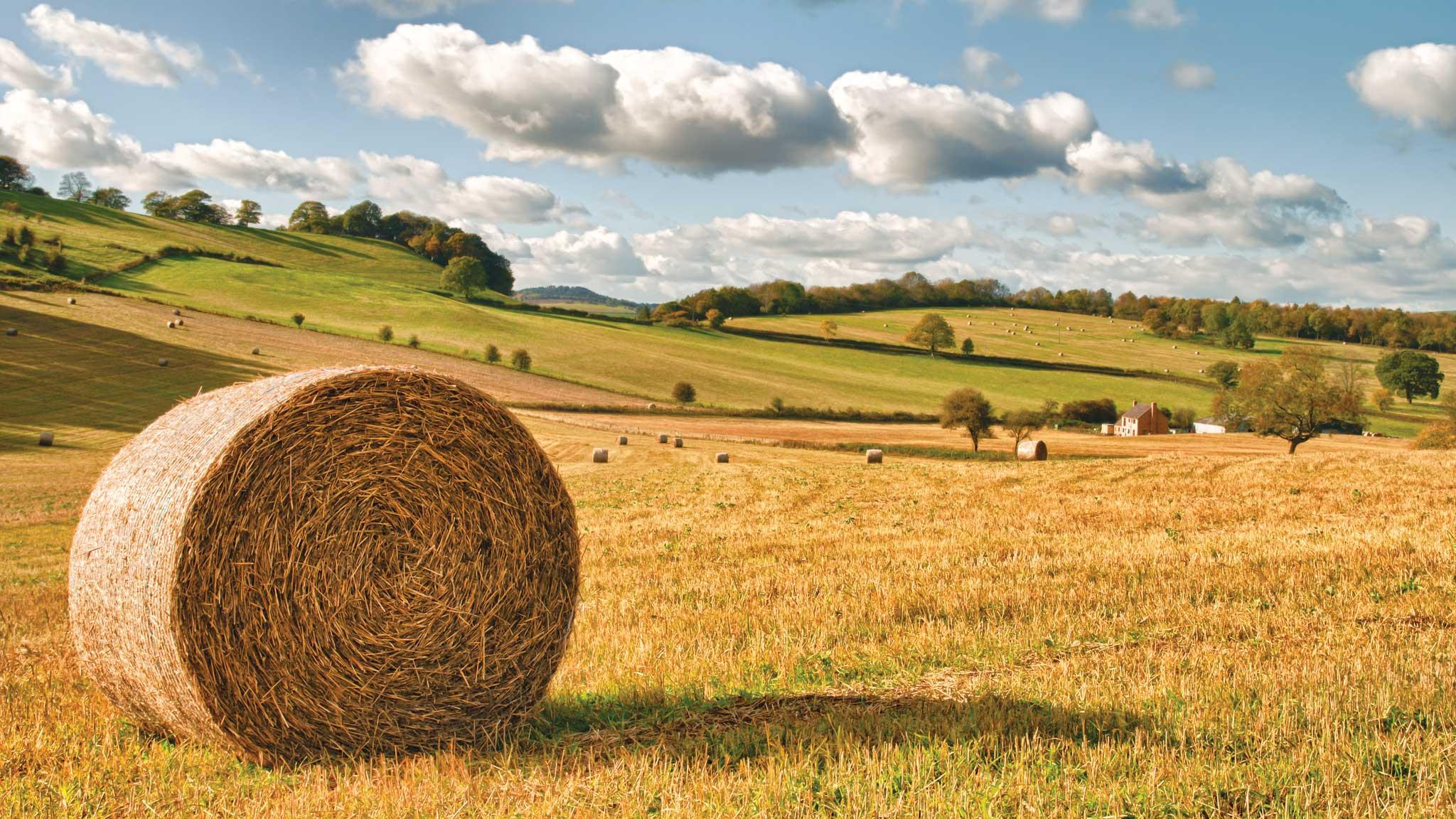 Farm Tenancies offer little security argues the TFA - https://roomslocal.co.uk/blog/farm-tenancies-offer-little-security-argues-the-tfa #tenancies #offer #little #security #argues