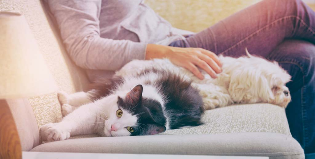 Should landlords be worried by the pet changes in the latest Model Tenancy Agreement? - https://roomslocal.co.uk/blog/should-landlords-be-worried-by-the-pet-changes-in-the-latest-model-tenancy-agreement #landlords #worried #changes #latest #model